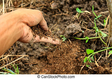 compost in hand use to growing plant