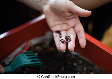Woman hand showing a worm from her composting box