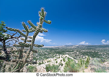 Cylindropuntia imbricata or Cane Cholla and compound aluvial fans or bajada in the foothills of the Sangre De Christo mountains between Truchas and Cordova, New Mexico. About 7200 feet. Up close the hills are all made of loose gravel and dirt deposited in clear layers.