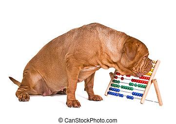 comptabilité, chien
