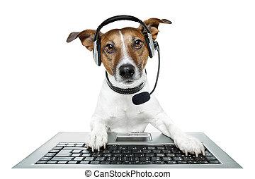 computadora computadora personal, perro, tableta