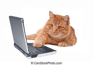 computadora, trabajando, gato
