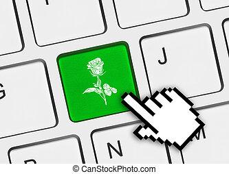 computer, bloem, klee, toetsenbord