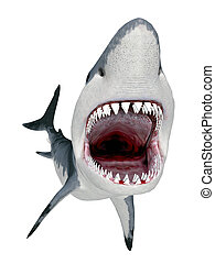 Computer generated 3D illustration with a Great White Shark isolated on white background