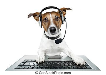 computer pc., hund, tablet