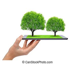 computer, tablet, bomen