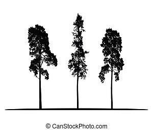 conífero, conjunto, aislado, árboles, alto, siluetas, vector, plano de fondo, blanco