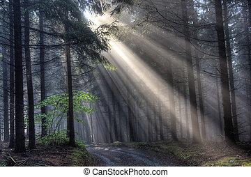 conífero, vigas, -, niebla, bosque, dios