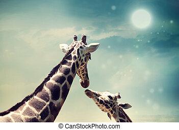 conceito, amor, girafas, imagem, amizade, ou