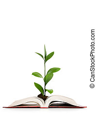 conceito, conhecimento, folhas, -, livro, crescendo, saída
