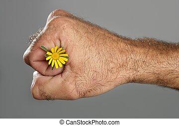 conceito, e, contraste, de, cabeludo, homem, mão, e, flor