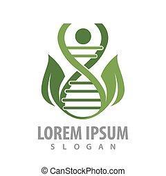 conceito, folha, human, adn, símbolo, gráfico, elemento, vetorial, modelo, logotipo, design.
