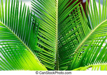 conceito, folha, natureza, primavera, folhas, tropicais, experiência., selva