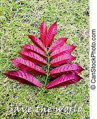 conceito, folhas, capim, verde, mundo, salvar, vermelho