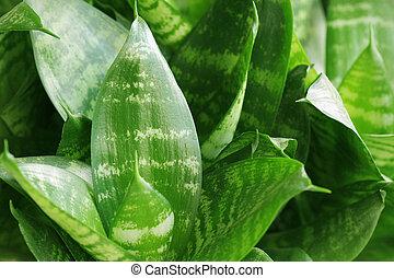 conceito, natureza, leaves., tropicais, experiência verde