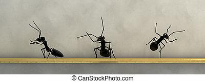 conceito, trabalho, formigas, equipe
