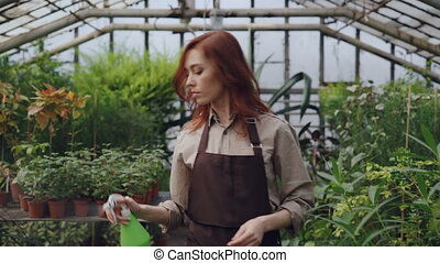 Concentrated young woman is spraying water on plants in greenhouse using spray bottle while her daughter is playing in background. Family business concept.