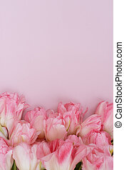 concept., 休日, 構成, 最小である, 花, 春, ピンクの背景, カラフルである, バックグラウンド。, 創造的