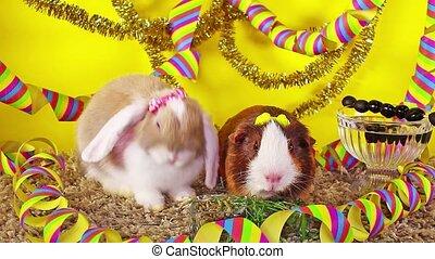 concept, aanhalen, eva, nieuw jaar, dier, jaar, feestje, vrolijke