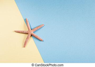 concept., blue-yellow, copia, estrellas de mar, plano de ...