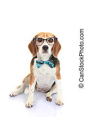 concept, businnes, chouchou, ou, chien, intelligence, formation