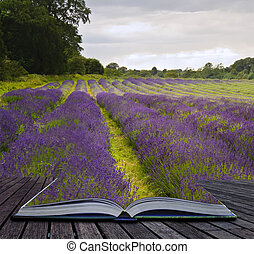 concept, champs, image, lavande, créatif, livre, venir, magique, pages, paysage, dehors