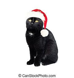 concept, chat, arrière-plan., noir, santa, chapeau blanc, noël