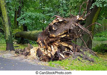 concept, déraciné, dangereux, après, arbre, parc, temps, orage