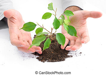 concept., ecológico
