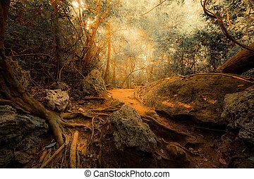 concept, fantasme, forêt, exotique, surréaliste, jungle, fond, mystérieux, paysage, colors.