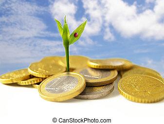 concept, financieel, muntjes, -, groei, nieuw, eurobiljet