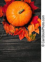 concept., heureux, potirons, copie, feuilles, space., fond, nature, automne, automne, thanksgiving