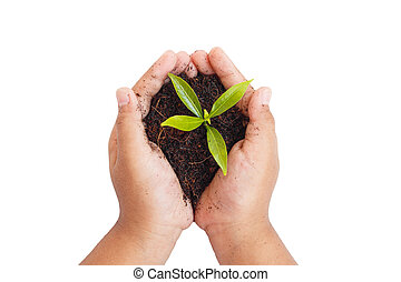 concept, jonge, ecologie, holdingshanden, plant.