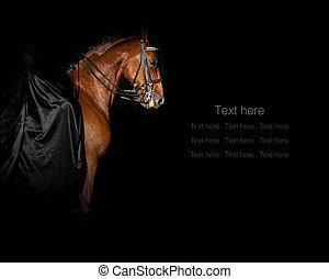 Concept: Lady rider in black silk dress on a purebred stallion standing in dark manege
