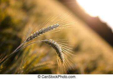 concept, landbouw