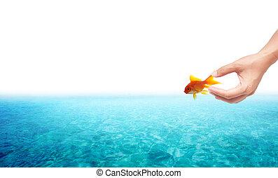 concept, liberté, main, relase, fond, poisson rouge, blanc