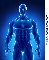 concept, musculaire, rayon x