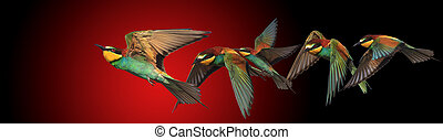 concept of creative and unusual thought, birds in flight