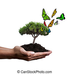 concept of ecology and sustainable development