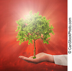 Concept of environmental protection. Hand hold a tree on a gloomy background. Save the planet.