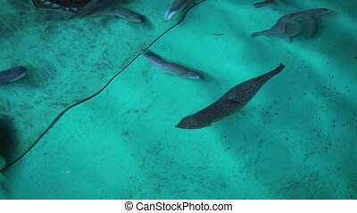 flock fish in a trout farm. Breeding trout for the food industry. Trout farming, fishing, freshwater fish farming.