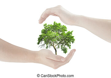 concept of hands protecting fresh green tree isolated