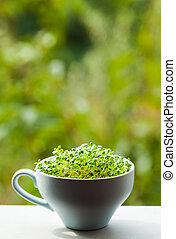 Concept of healthy life - organic micro greens