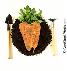 concept of natural and organic food - carrots and greens on...