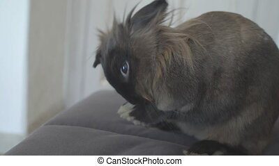 concept of pets. Cute rabbit in the apartment