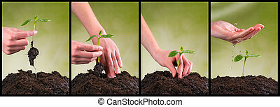 Concept of seeding and plant growing in collection