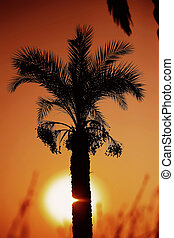 sunset over palm tree