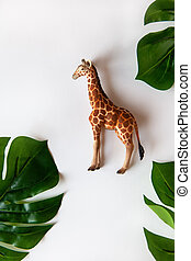 Concept of World giraffe protection day. Little toy realistic giraffe cub in center of frame, green monstera leaves around edges. White background, close-up, top view.