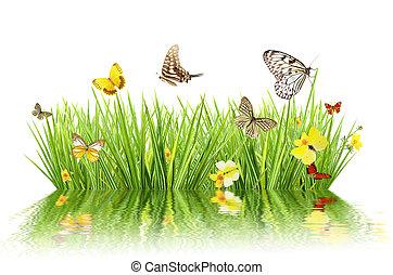 concept, pré, réflexion., printemps, isolé, eau, fond, blanc