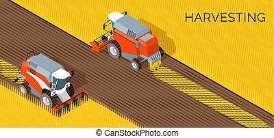 concept, récolte, machine, champ, grain, agriculture, combiner, récolte